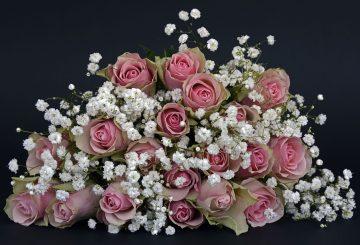 roses-1420719_1280